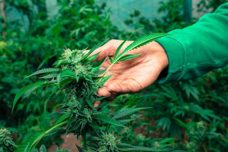 Bewährungsstrafe für Cannabisplantage am Amtsgericht Lünen